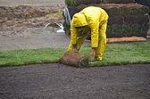 Man laying sod in the rain — Stock Photo
