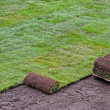 Rolls of new sod — Stock Photo