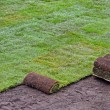 Stock Photo: Rolls of new sod