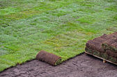 Rolls of new sod — Photo