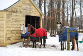Horses in winter with blankets — Stock Photo