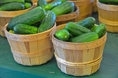 Cucumbers in bushel baskets — Stock Photo