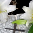 Stock Photo: Easter lilies with spikes