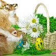 Easter Bunnies with daisies — Stock Photo