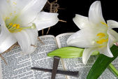 Easter lilies with spikes — Stock Photo