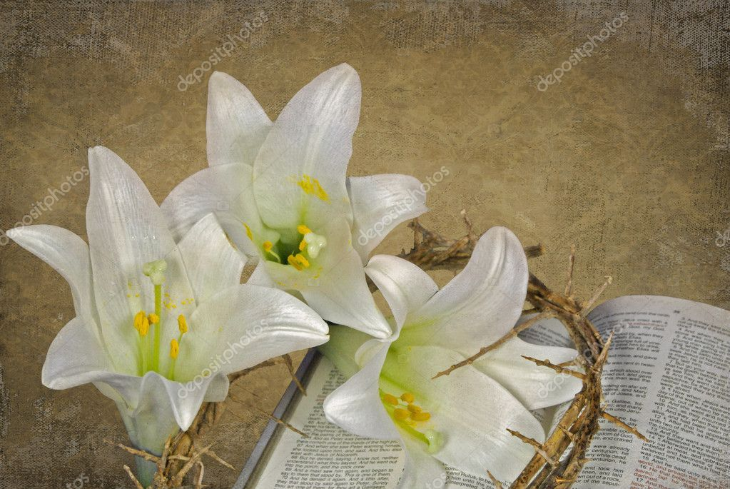 White lilies and crown of thorns on Holy Bible.  Stock Photo #17610107