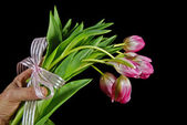 Bouquet of tulip gift — Stock Photo