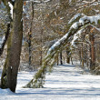 Winter path in the woods — Stock Photo