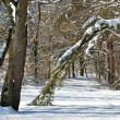 Winter path in the woods — Stock Photo #20634233