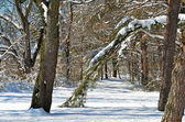 Winter path in the woods — Stok fotoğraf