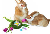 Easter Bunnies with nest — Stock Photo