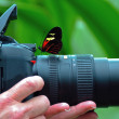 Stock Photo: Longwing Butterfly on camera