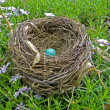 Single robin's egg in nest — Stock Photo