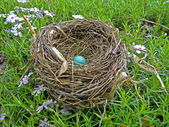 Single robin's egg in nest — Foto de Stock