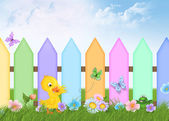 Duckling with picket fence — Stock Photo