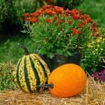 Autumn gourds on hay bale — Stock Photo #31957441