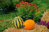 Autumn gourds on hay bale — Stock Photo