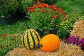 Autumn gourds on hay bale — Stock Photo