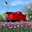 Stock Photo: Bright red caboose with tulips