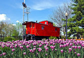 Bright red caboose with tulips — Stock Photo
