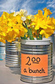 Daffodil bunches in tin cans — Stock Photo