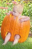 Dziewczynka w jesień dyni — Zdjęcie stockowe