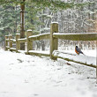 Robin on winter fence — Stock Photo #41390959