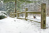 Robin on winter fence — Stock Photo