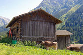 Cow and barn in Austria — Stock Photo