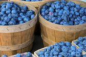 Blueberries in bushel baskets — Stock Photo