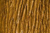 Texture de l'écorce — Photo