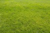 草草坪 — 图库照片