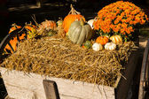 Pumpkins and gourds — Stock fotografie