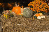 Gourds on hay — Stock Photo