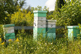Stacked beehives — Stock Photo