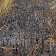 Grass field was burned — Stockfoto #18779619