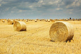 Harvest time. Hay bales on the field. — Stock Photo