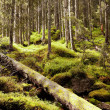Stock Photo: Forest in spring, Tatry