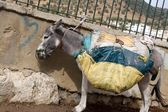 Heavy Loaded Moroccan Donkey With Yellow Bags on Him — Stock Photo