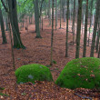 Rocks Covered by Green Moss in Autumn Forest — Stock Photo #13852480