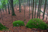 Rocks Covered by Green Moss in Autumn Forest — Stock Photo