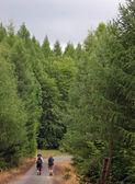 Turystow, trekking na drodze poprzez drewno — Zdjęcie stockowe