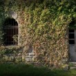 Entrance to an Old Building Ivied by Ivy — Stock Photo #13950030