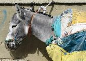 Donkey With Yellow Bags on Him — Stock Photo