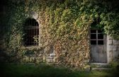 Entrance to an Old Building Ivied by Ivy — Stock Photo