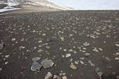 Sandy Surface Covered by Little Stones in Tundra in the Svalbard Archipelago. — Stock Photo