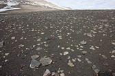 Superficie arenosa cubierta por pequeñas piedras en la tundra en el archipiélago de svalbard. — Foto de Stock