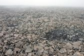 Rocky Surface in Tundra at the Svalbard Archipelago in the Arctic. — Stock Photo