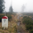 Stock Photo: Borderline Bollard Along Footpath in Foggy Forest
