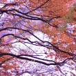 Stock Photo: Black Tree Silhouette With Well Saturated Orange Leaves